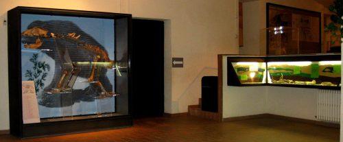 MUSEU ARQUEOLÒGIC I PALEONTOLÒGIC DE MOIÀ